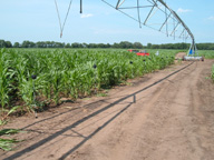 Laporte County AWEP Irrigation Project
