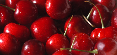 Cherries, like those seen here, are among the organic produce grown on the Adolfo Alvarez Farm.