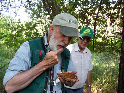 Mike Johnson, Forest entomologist, WA DNR sampling tasty Mountain pine beetle larvae