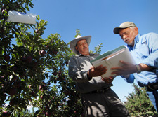 imageL Orchard owner Sergio Marquez (left) and Oscar Tobias, NRCS civil engineering technician  review the Marquez conservation plan.
