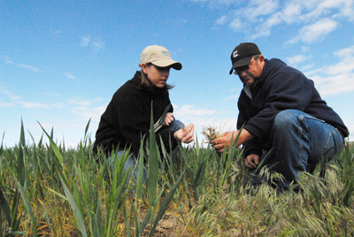 NRCS Resource Conservationist, Amanda Ettestad (left) and Don Walker examine the root structure of this year's direct seed wheat crop.