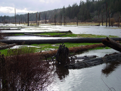 This photo is of the Tarboo Wetland Restoration