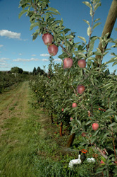 The Tier III CSP contract for the Garcia's includes some 400 acres of orchards and features additional enhancements.