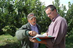 Amid the cherry tree branches of one of G&G's orchards, Rene Garcia (left) and NRCS Conservation Agronomist Kevin Davis review the Garcia's CSP conservation plan.
