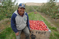 Miguel Contreras on his 56-acre orchard just north of Zillah, Washington.