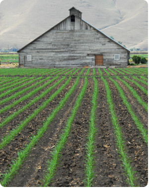 An image of an older gray barn and farmland.