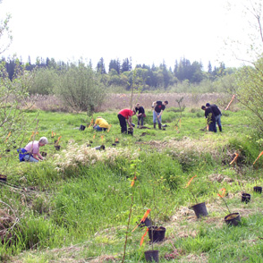 Earth Day volunteers are hard at work planting along the creek in the wildlife sanctuary.