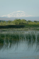 NRCS has committed more than $340,000 to the Yakama Nation's Tribal wetlands restoration efforts, seen here in the foreground with majestic Mt. Adams as a scenic backdrop.