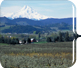 A photo of Mt. hood and an orchard