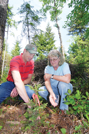 Jeff Swotek and landowner Donna Albert examine a newly planted tree in her forest.
