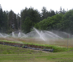 EQIP assisted improvements to organic cranberry bog irrigation system make the application of water and nutrients more efficient resulting in a water use savings.