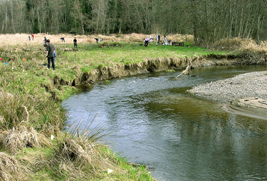 Image: Volunteers planting a portion of Ohop Creek.