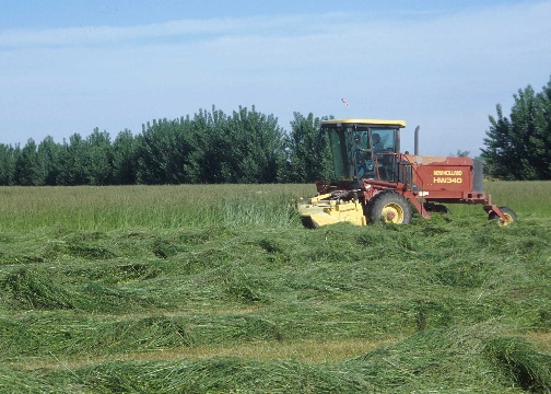 Harvesting hay for use as feed for livestock.