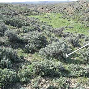 Photo shows location of sage-grouse nest under sagebrush cover near an area with green plants.