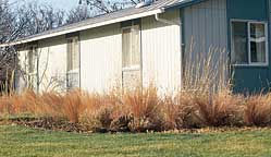 Fall photo of native grasses used as accent border.