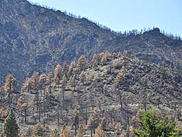 This photo show blackened tree trunks after fire has passed through the area.