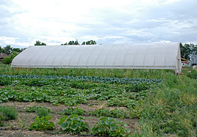 Photo shows seasonal high tunnel with vegetables also growing in foreground.