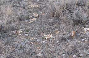 Photo shows several piles of winter scat.