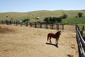 Photo of horse standing in new corral system