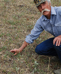Photo of ranch manager pointing out diminished size of kanpweed.