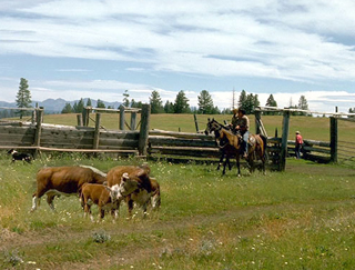 GRP participants implement grazing plans that benefit natural resources.
