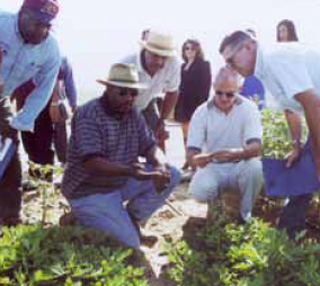 Robinson (second from left) points out crops being studied at the site.
