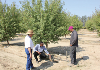 Vang (left), Grimes (center) and Boparai discuss the effectiveness of using a drip irrigation system.