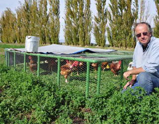 Turkens on alfalfa build fertility fast on Eatwell Farms. Nigel Walker houses some in portable chicken tractors.