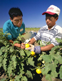 Hmong farmers, Central Valley, California