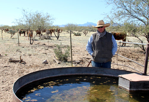 cattle water tanks Success
