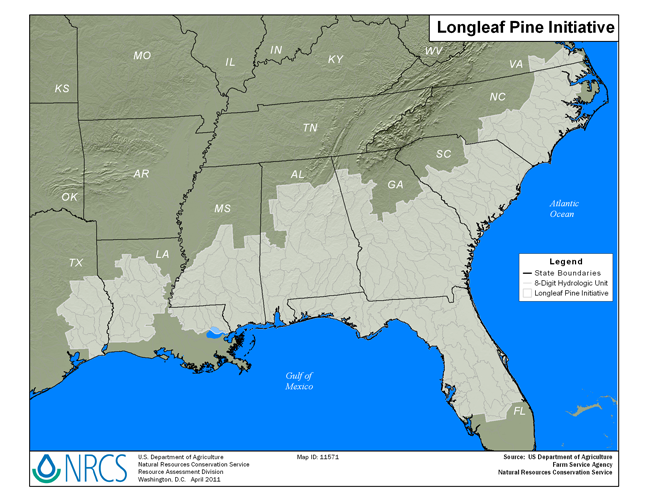 Longleaf Pine Initiative Map - Small