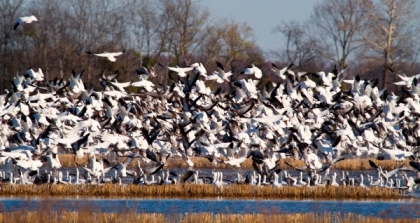 Migratory Birds Initiative - Small
