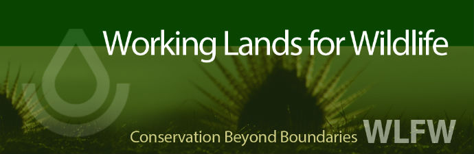 Working Lands for Wildlife banner