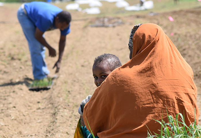 Nrcs Grant Helps Immigrant Farmers In Maine Succeed With