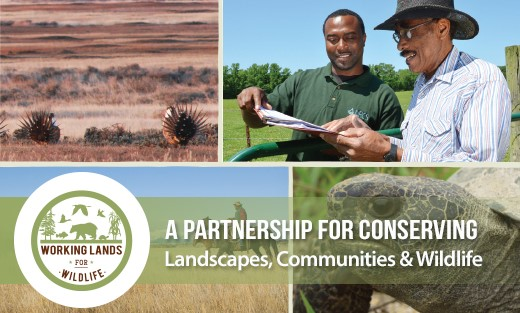 New Magazine: Agriculture, Wildlife Both Thrive through Landscape Conservation