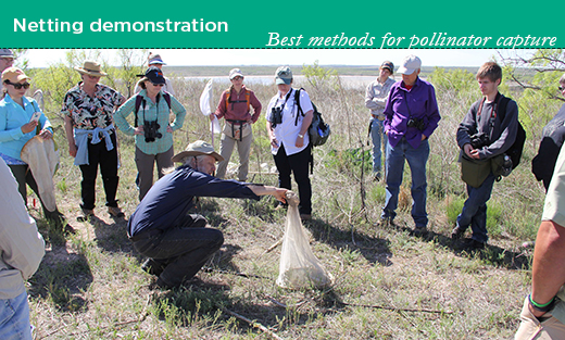 Sam Droege with USGS shows participants the best methods for pollinator capture techniques.