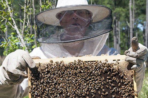 A workshop he took two years ago prompted Willie Earl Paramore to become a beekeeper.
