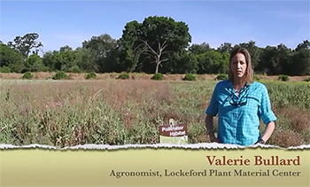 The Benefits of Pollinator Seed Mixes video, NRCS Lockeford PMC