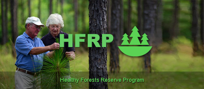 Healthy Forest Reserve Program banner - Image of a man and woman looking at evergreen needles in a forest.