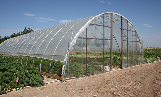 High tunnels allow the growing season to be extended which can help increase local market demands and diversity of the agriculture operation.