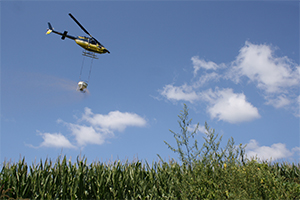 A helicopter drops rye seed on a cornfield.