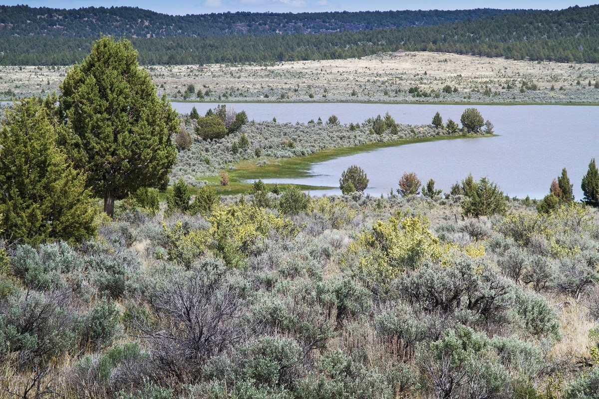 Sagebrush Rangelands Help Maintain Water Availability