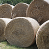 One of the benefits of an efficient irrigation system and land leveling is better hay production.
