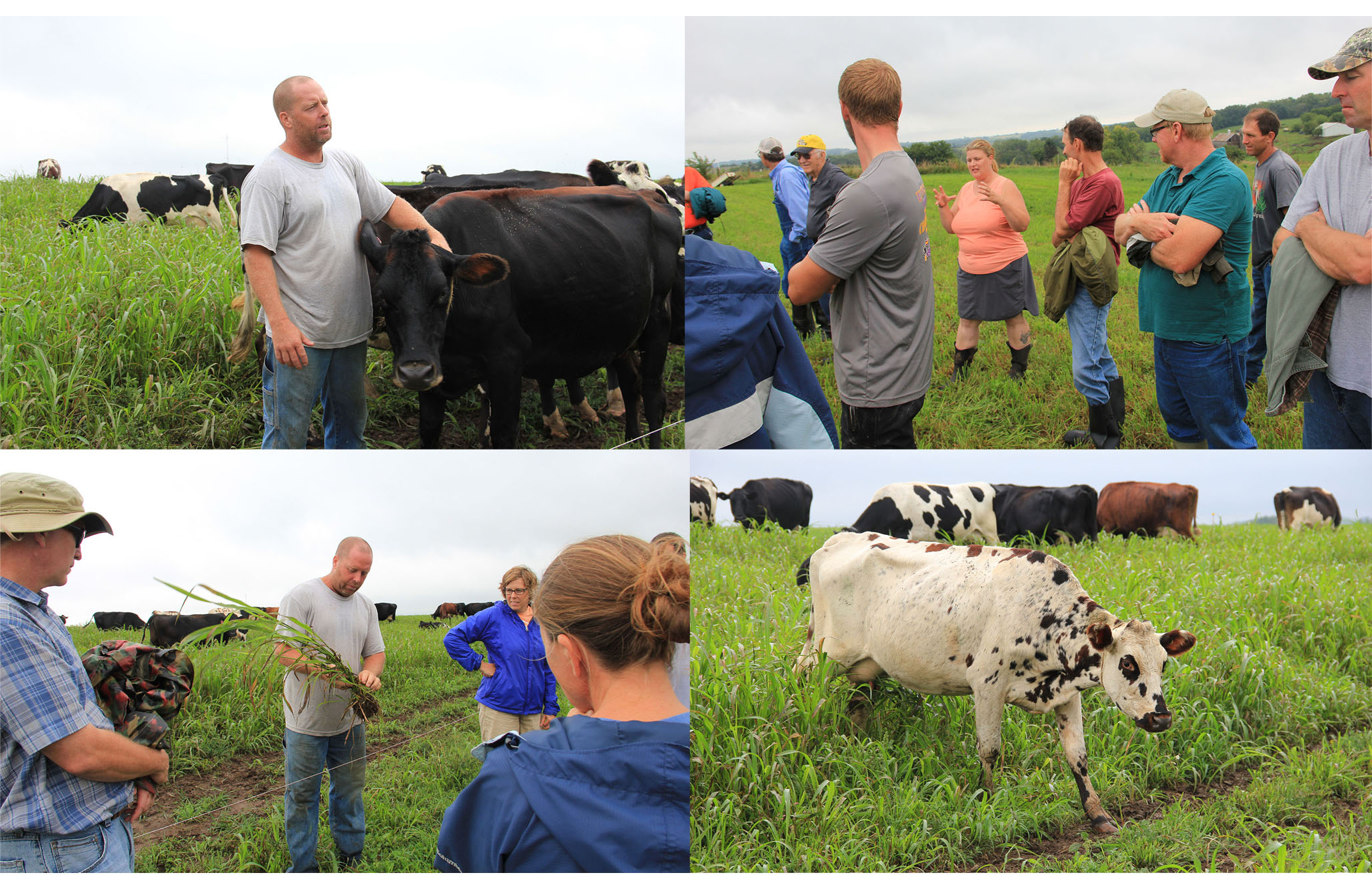 Wisconsin Pasture >> Pasture Walk Highlights Using Annual Grasses To Increase Pasture
