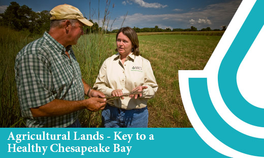 Ag Lands Key to a Healthy Chesapeake Bay