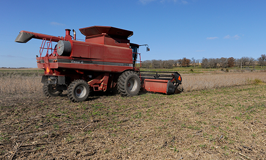 Guthrie County farmer Robert Harvey harvests soybeans, which shows the green cereal rye cover crop showing through.