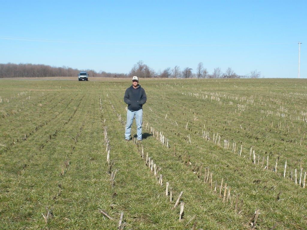 Dave Mago in a field with a cover crop after corn