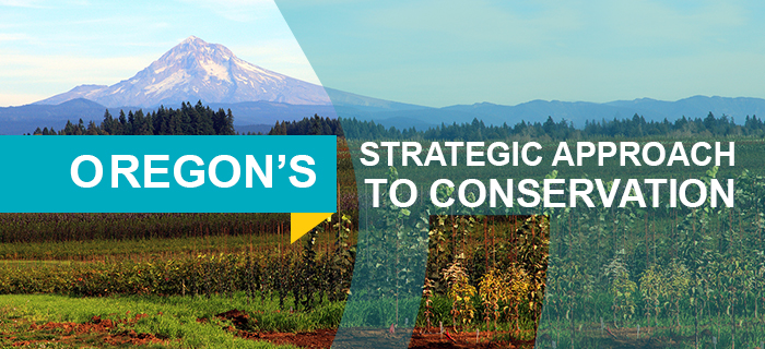 Header - Strategic Approach to Conservation