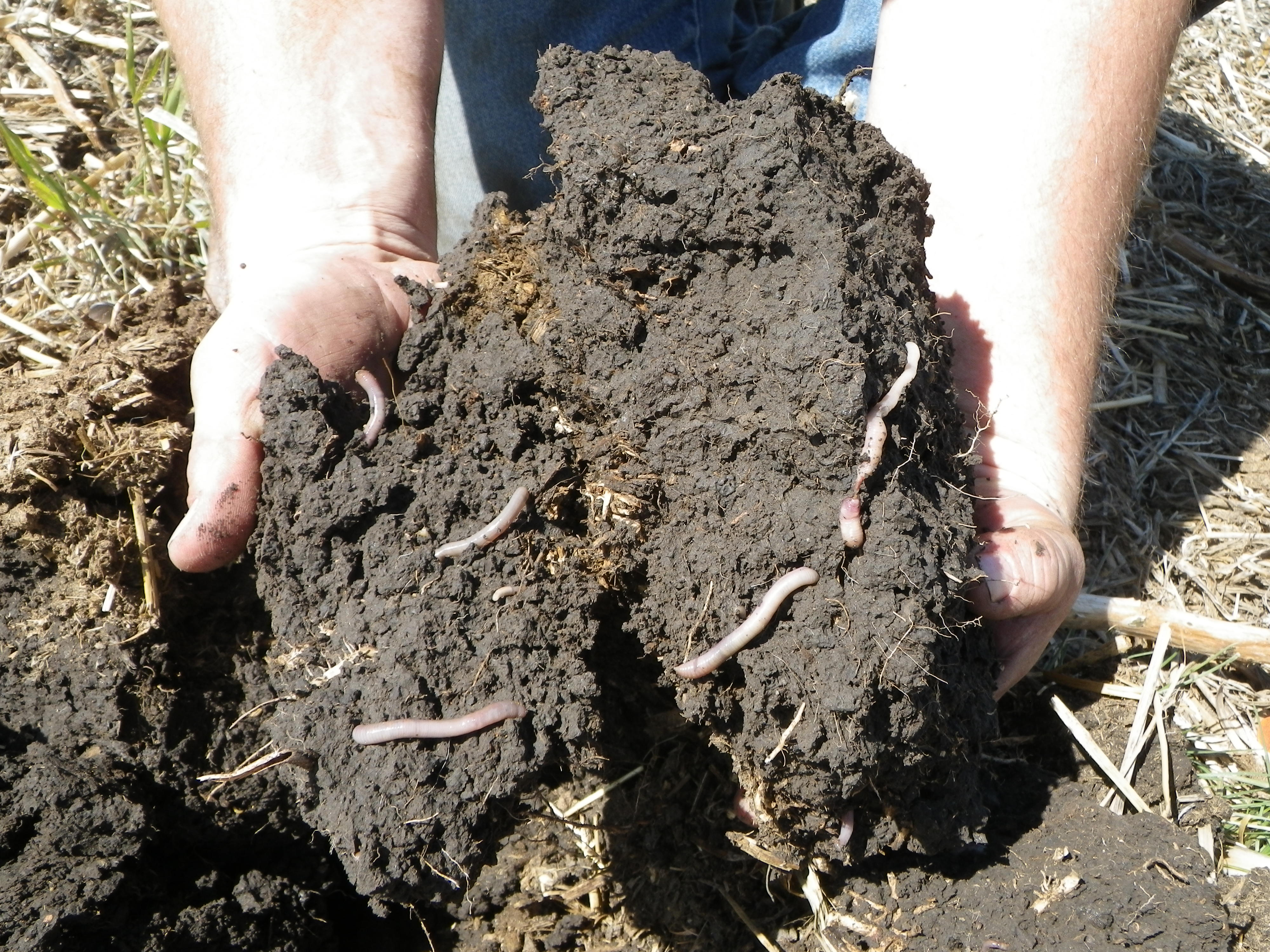 Principle 2: Minimizing soil disturbance