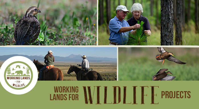 Working Lands for Wildlife Projects Page Header